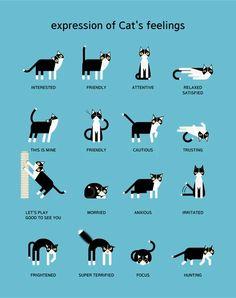 Basic Cat Training Tips for Beginners - Katzensprache - Miezekatze Raising Kittens, Cats And Kittens, I Love Cats, Cute Cats, Cat Body, Cat Care Tips, Pet Care, Pet Tips, Kitten Care