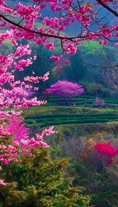 New Mother Nature Photography Beauty Landscapes 68 Ideas Beautiful World, Beautiful Gardens, Beautiful Flowers, Beautiful Places, Beautiful Scenery, Beautiful Beautiful, All Nature, Amazing Nature, Nature Scenes