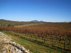 Blackstock Vineyards & Winery in Dahlonega, Georgia.