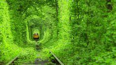 Výsledek obrázku pro green tunnel