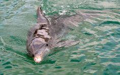 Sarasota Florida wildlife