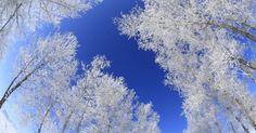 Neve modifica a paisagem e deixa árvores todas brancas em Tu'erhong Township, na China