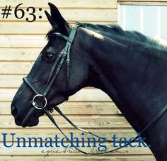 Equestrian Problem #63 Submitted by an Anon