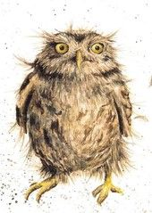 Wrendale Designs by Hannah Dale What a Hoot Greeting Card - Set of Three Owl Illustration, Wrendale Designs, Owl Card, Paper Owls, Watercolor Animals, Animal Drawings, Pet Birds, Illustrators, Decoupage