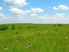 The tall grass prair