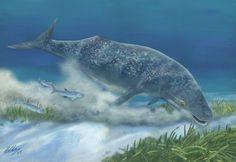 Mammalodon colliveri (Cetacea: Mysticeti: Mammalodontidae) Oligoceno Australia by Gogosardina on deviantART