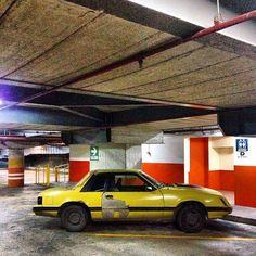 Mustang Fox, en Sabana Grande