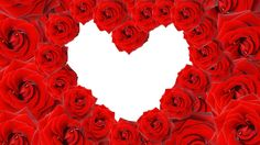 Love Red roses in a heart shape on white background