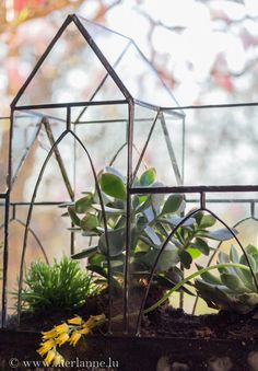 Urban Jungle Bloggers: Plants & Glass by @cfreylinger