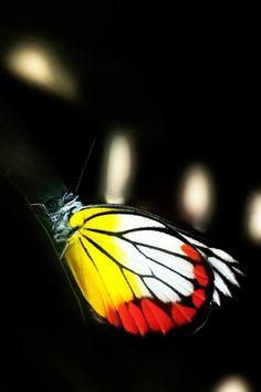 Butterfly #wild