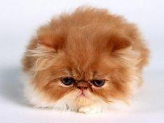 Angry fur ball!