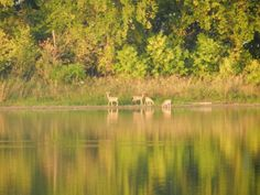 Lewis and Clark State Park, submitted by Becky Fry Adams. #Fall in #Iowa