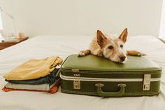 Dogs are man's best friends, but they're not always the best match for jetsetters. Or are they? Here's how to trot the globe with your four-pawed companion—without cramping your style.