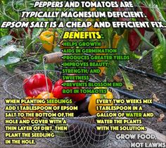 Epson Salt Benefits For Gardens
