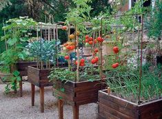 Garden design, post design 5577116414 for that stunning yard. Garden Beds, Vegetable Garden, Garden Plants, Flower Gardening, Organic Farming, Organic Gardening, Hydroponic Gardening, Permaculture, Back Gardens