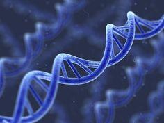 Sigara DNA'yı Bozuyor.!    Kalıtımda rol oynayan, canlıları yönetici, hücrenin protein ve enzim sentezinde etkili olan ve yeni hücre meydana getirecek gereken elemanları taşıyan hücre bölünmesini sağlayan bir nükleik asit çeşitidir. Deoksiribo nükleik asit adındaki bu molekül DNA olarak adlandırılır.