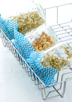 Grow sprouts in glass jars