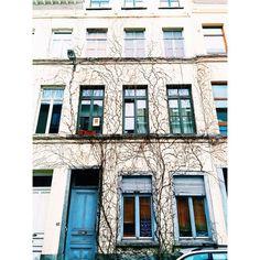 Wicked #brussels #brussel #bruxelles #belgium #belgique #belgië #brusselsarchitecture #bxl #instabxl #ixelles #elsene #vines #vignes #wijnstokken #facade #buildings #wild #winter #hiver (at Rue de la Croix, Ixelles)