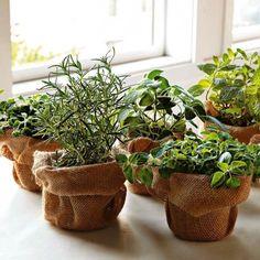 Window sill herbs~love the burlap