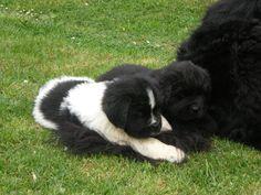 Wendy e Cookie sulla coda di mamma Tricky