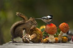 The squirrel the bird and the mushroom by Andre Villeneuve - Photo 126214755 - 500px