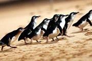 nav attr penguins