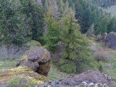 saddle mt Climbing, Hiking, Mountains, Water, Travel, Outdoor, Walks, Gripe Water, Outdoors
