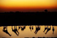 Entardecer em Okaukuejo, Parque Etosha, Namíbia