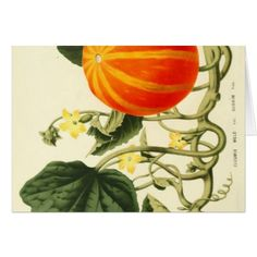 Shop Vintage botanical print of pumpkin. postcard created by LittleLittleDesign. Personalize it with photos & text or purchase as is! Thanksgiving Greeting Cards, Holiday Cards, Holiday Decor, Family Holiday, Happy Thanksgiving, Pumpkin Cards, Vintage Botanical Prints, Postcard Size, Photo Cards