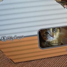 Everybody say...awwwwwwww....seriously how cute is this kitty having a great time chilling in their kitty camper cat house. Now includes cat toys - a feather and a mouse. Made with cardboard to promote healthy cat scratching and chewing! Super fun! :) Great as an indoor and outdoor cat house.