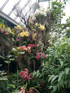 Pin By Jennifer McNeela On Orchid Show Chicago Botanical Gardens | Pinterest