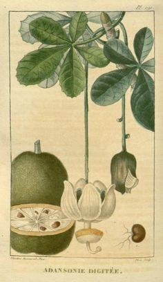 Flore médicale des Antilles, ou, Traité des plantes usuelles :. Paris :Pichard,1821-1829.