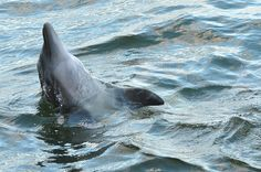 Moko the dolphin led two beached whales to safety.   19 Facts That Prove Animals Have Souls