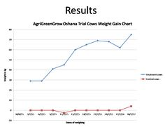 Agri GreenGrow ran a trial to test the efficiency of sprouted fodder on beef cattle during periods of drought Beef Cattle, Trials, Weight Gain, Chart