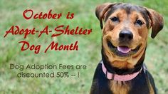 We're thrilled several long-time shelter residents found homes last week, but there are still lots of lovable animals waiting for forever homes of their own! Through THIS Saturday (October 31), adoption fees are half off for any dog over 1 year of age. Come meet a forever friend today!