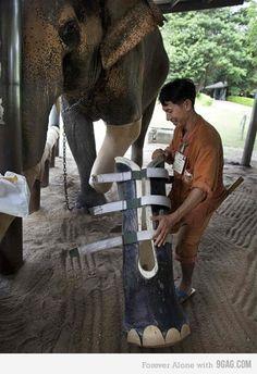 Elephants are amazing creatures
