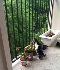 """Captions are pretty spot on lol! - """"Cats Who Are Outside For The First Time And Trying Not To Lose Their Sh!t"""""""