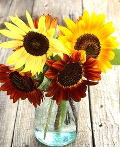 Autumn Beauty Sunflower Seeds Heirloom Sunflowers in Mixed Colors Great For Cut Flower Gardens