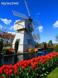 Skagit Valley Tulip Festival - Beautiful pictures and helpful tips. I LOVE WASHINGTON STATE!
