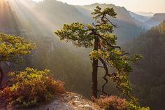 https://flic.kr/p/zS68af | Tree & Light (Explore) | Mal ein Bild aus dem Sommer das noch auf meiner Festplatte schlummerte. Es war ein herrliches Licht an diesem Morgen, wie die Sonnenstrahlen über die Baumwipfel in das Tal fielen.