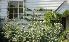 Bumble at Home: artichokes anyone ?