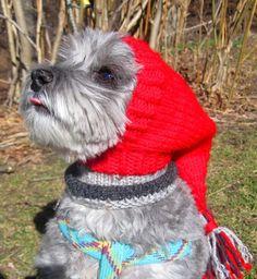 Dog hats-READY TO SHIP/maltese hat/italian greyhound/yorkie hat/daschund hat/dog warm ears/dog warm neck/dog snood/dog scarf/daschund hat
