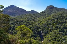 The natural heritage of Tijuca Forest