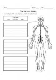 Worksheets Nervous System Worksheet nervous system worksheet and worksheets english teaching system