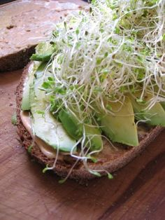 alfalfa sprouts. Good breakfast food #alfalfa