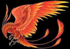 Phoenix by shadow destiny