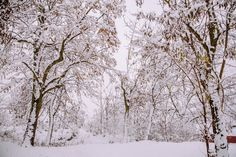 Artistic Photography, Film Photography, Family Style Restaurants, Snowy Trees, Photography And Videography, Family Photographer, Im Not Perfect, In This Moment, Outdoor
