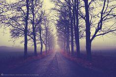 Foggy Lane by Lorena Masi on 500px