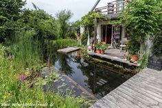 Bei so einem Naturgarten muß man nicht mehr in Urlaub fahren. Entspannung unmittelbar vor der Haustüre. (Schwimmteich Teich Naturgarten Naturschwimmteich nature garden swimming pond)
