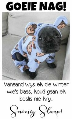 Good Night Sleep Tight, Goeie Nag, Christian Messages, Good Night Quotes, Prayer Quotes, Afrikaans, French Bulldog, Words, Animals
